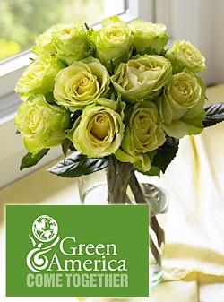 Green America Roses