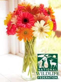 National Wildlife Federation Daisies