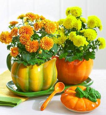 Pumpkin Sugar and Creamer Set with Fall Mini Plants