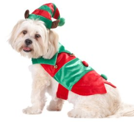 PETCO Holiday Dog Elf Suit