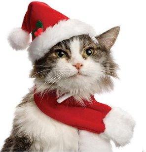 PETCO Mrs. Claus Cat Costume