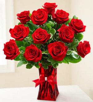 Premium Ruby Red Roses