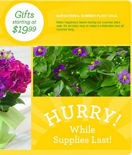 1800-flowers-plants