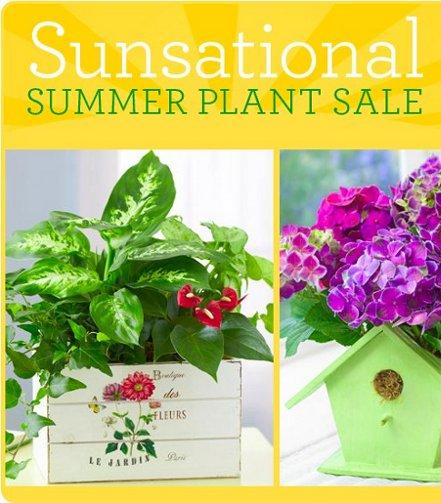 1800-flowers-sale