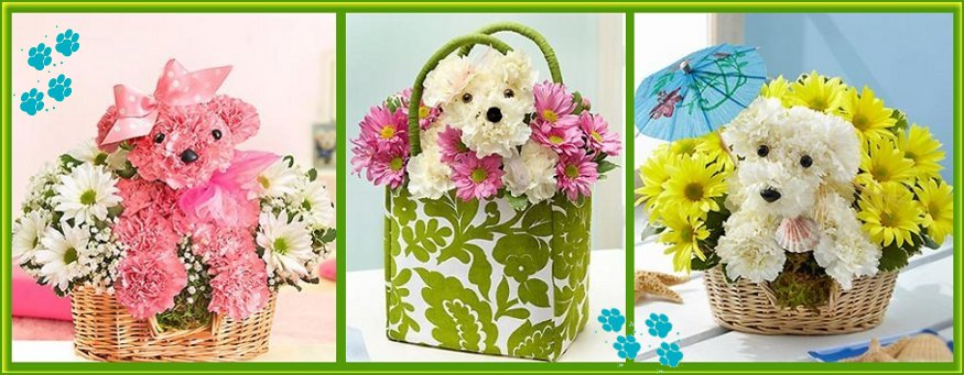 1800flowers dogable collection