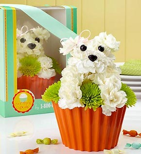 Pup-cake in Bloom