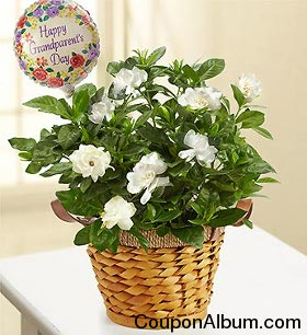 Happy Grandparents Day - Gardenia