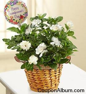 Happy Grandparents Day - Gardenia