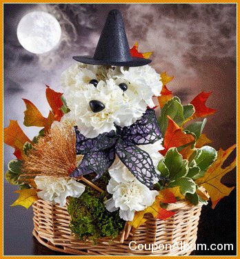 1800flowers-witchy-pooch