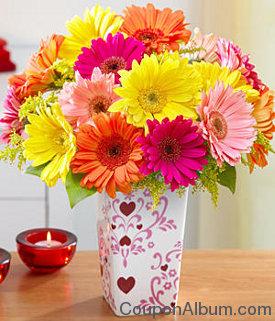 Valentine's Day Gerbera Daisies