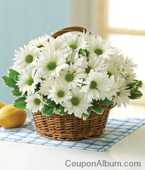 irish daisy basket