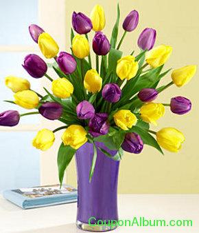 30 royal dutch tulips